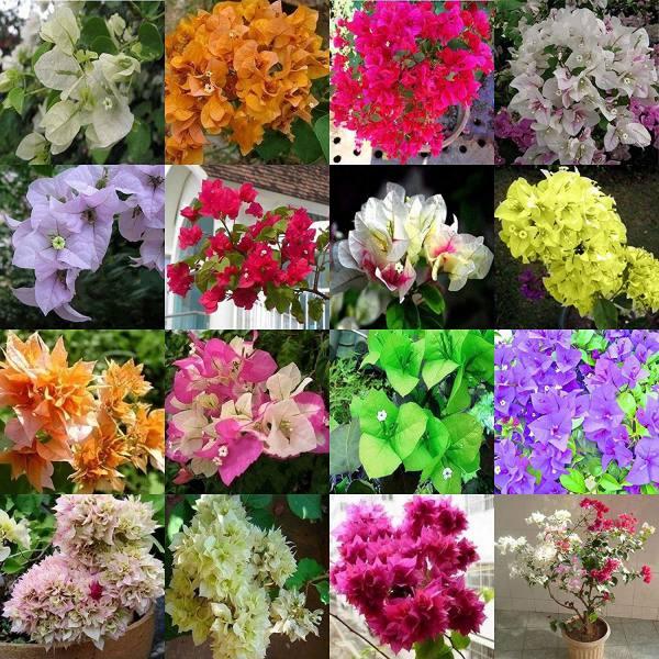 Tổng hợp màu sắc hoa giấy