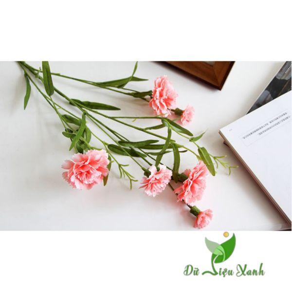 Cành hoa cẩm chướng