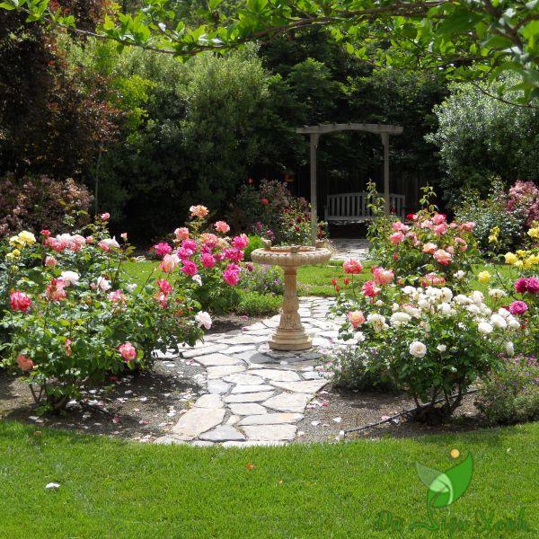 Các khóm hoa trong vườn
